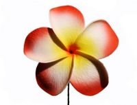 Yellow & Red Plumeria Foam Flower