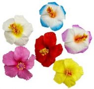 Hibiscus Clips