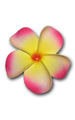 Large Pink/Yellow Plumeria
