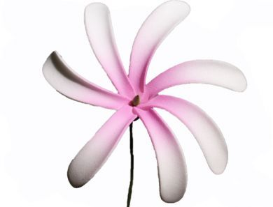 Pink & White Foam Tiare Flower